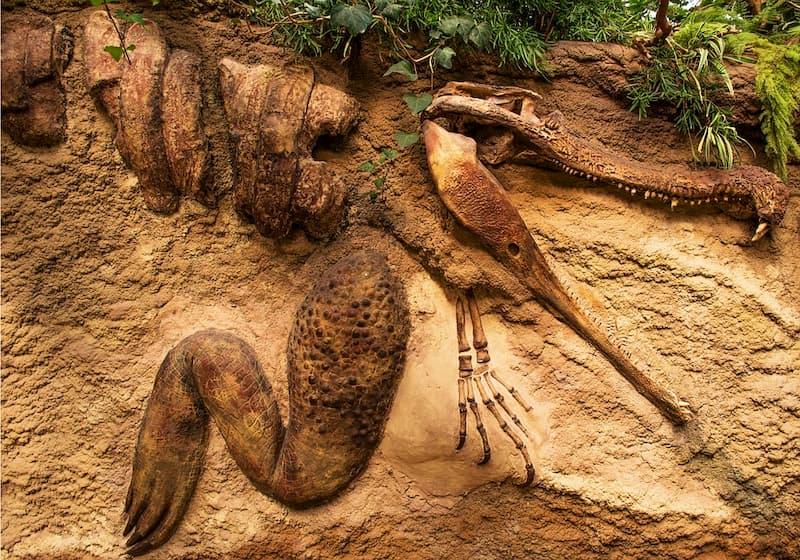 fosil nasıl oluşur