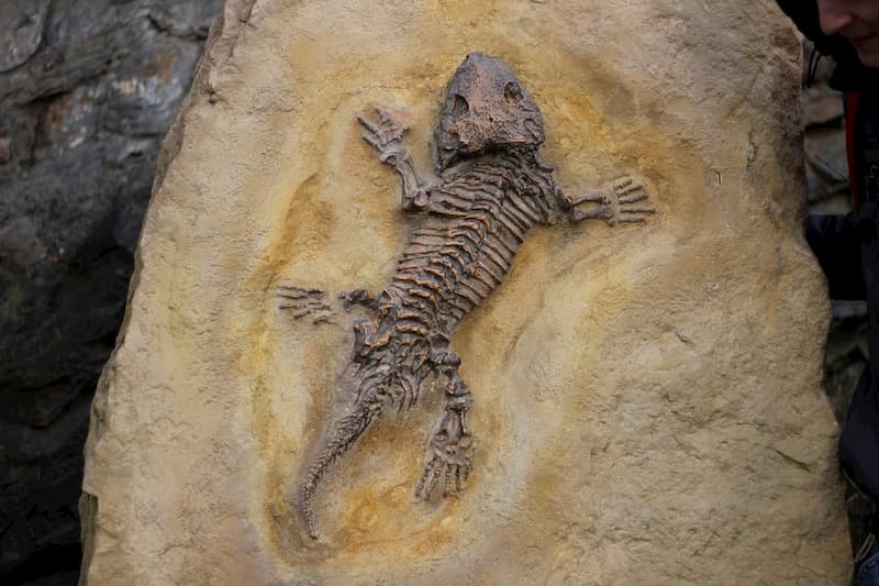 kertenkele fosili